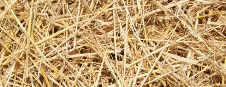 Straw-Biomass