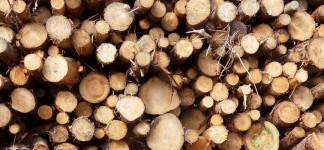 Biomass-fuels1