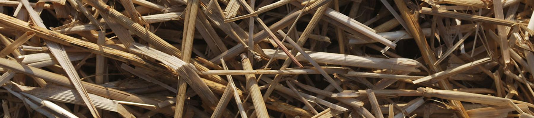 Biomass-fuels6