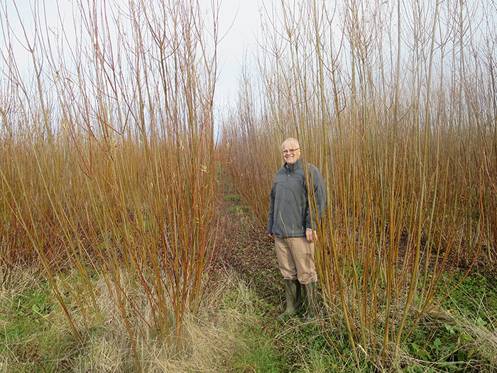 Mike Pearson with the SRC willow crop
